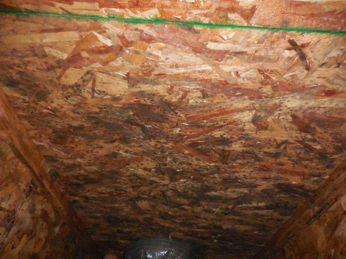 Mold Removal in Twin Falls, ID.