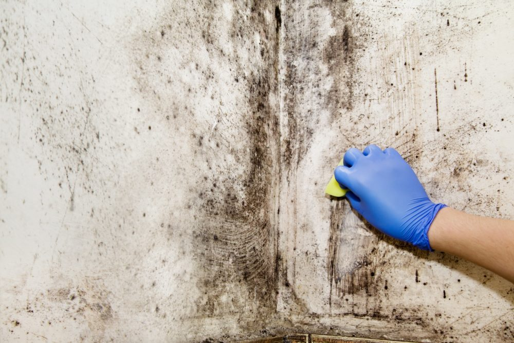 restoration expert performing mold remediation