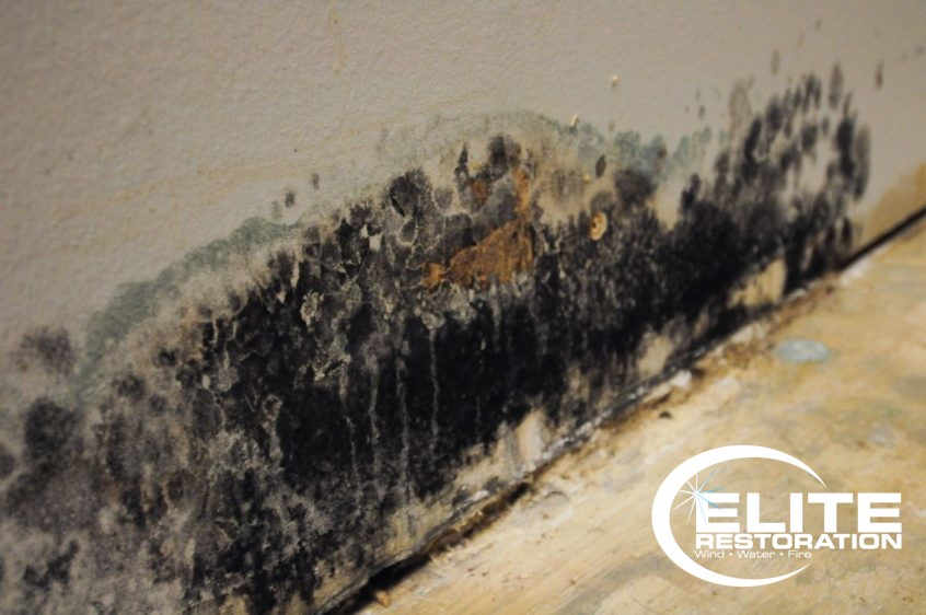 Does my home have mold?