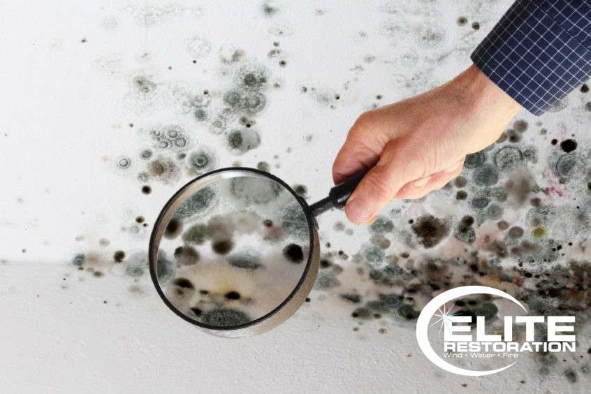 man examining winter mold with a magnifying glass