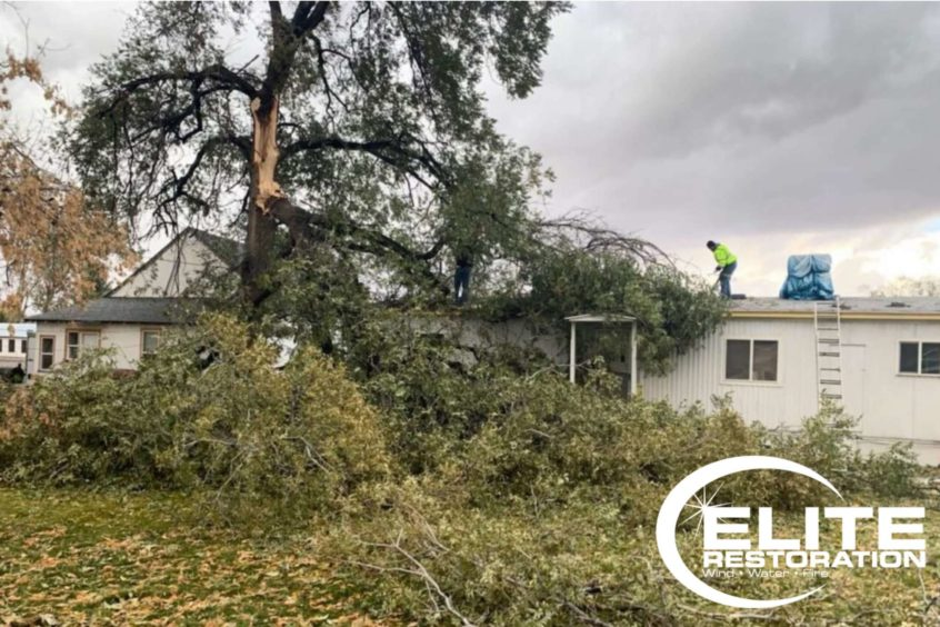 large-tree-fallen-onto-residential-home